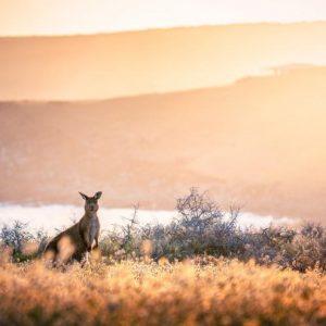 travel crafters kangaroo island